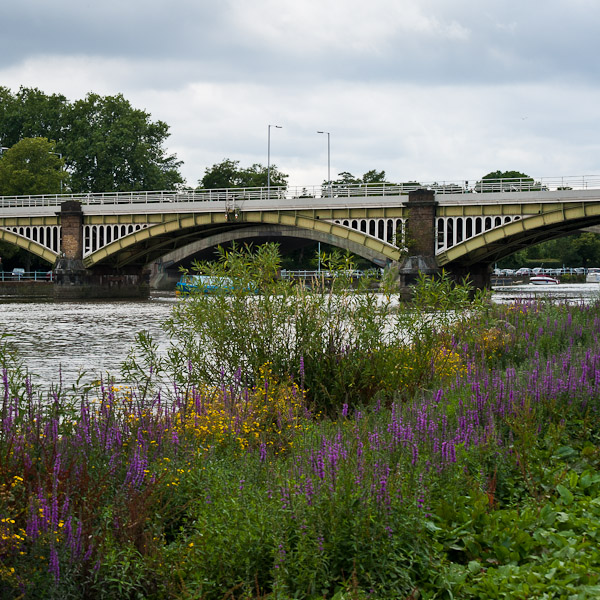 Thames Path from Putney Bridge to Kingston