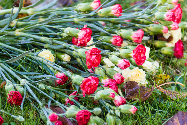 Red on Green: A bunch of red carnations left on the ground at the crematorium