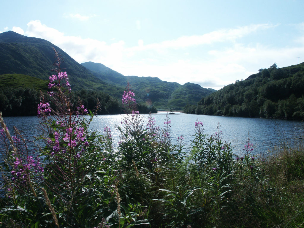 Flowers By Loch Awe
