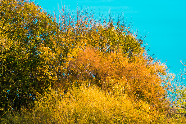 Picture 11: Autumn foliage on cyan sky