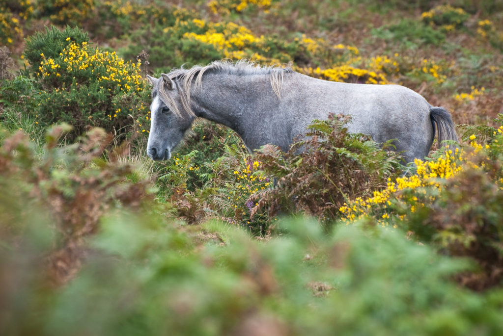 Pony In Vegetation